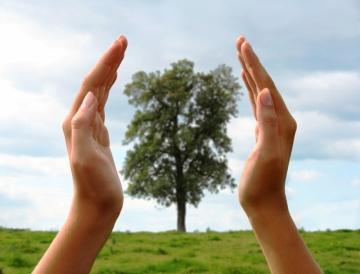 tree_care